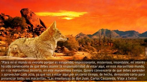 citas_chamanicas_castaneda.jpg